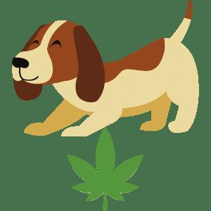 cbd olja hundar